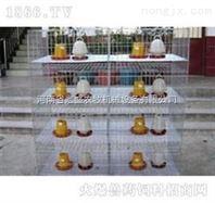 河南省宏盛立式育雏笼专业定做各种笼子批发