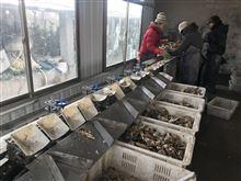 海鲜牡蛎自动分拣机海参分级加工企业的福音