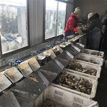 海蛎子立体式重量分选机  牡蛎分拣机