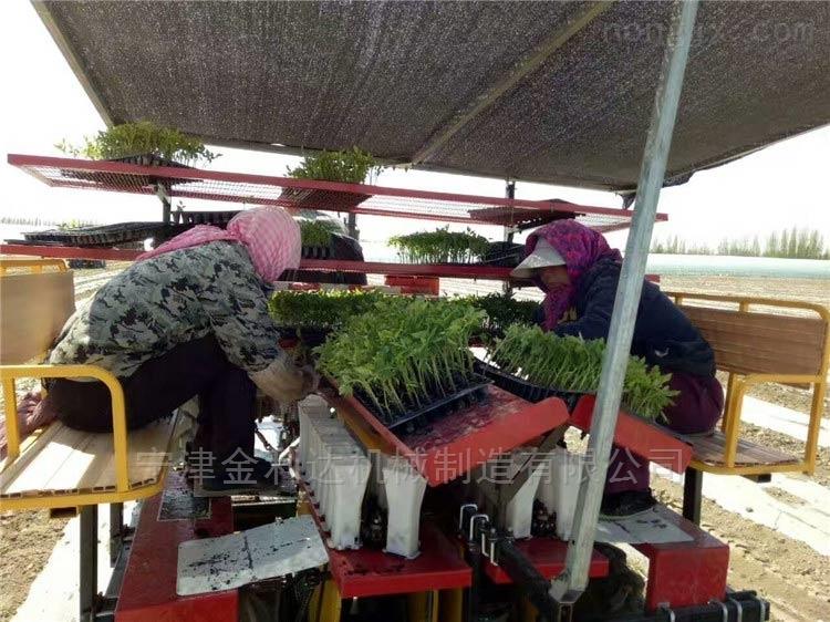 宁津县各种蔬菜苗机子番茄移栽机