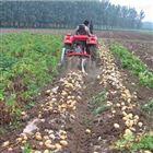 xnjx多功能红薯土豆收获机山东地瓜收割机型号