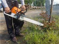 内蒙古汽油挖树机厂家 冬青松柏树木移栽机