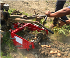 ST-0.8全自动地瓜收获机地瓜挖掘机价格