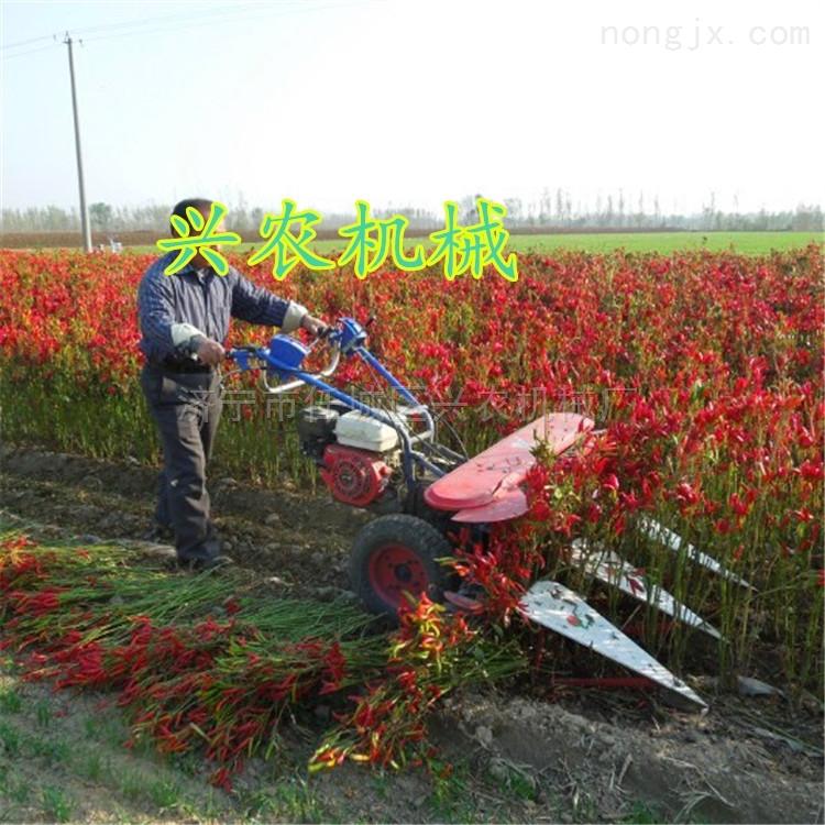 小型玉米割曬機 多功能手扶辣椒收獲機