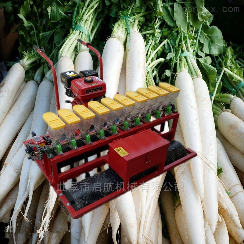 蔬菜精量播种机 萝卜精播机 白菜6行点播机