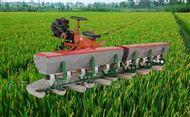 DS50水稻点播机价格
