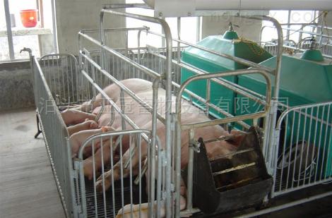 母猪普通双体产床