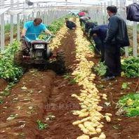 70cm 宽幅土豆杀秧收获机