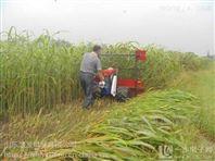 芦苇青储秸秆高架收割机 多功能薄荷割晒机