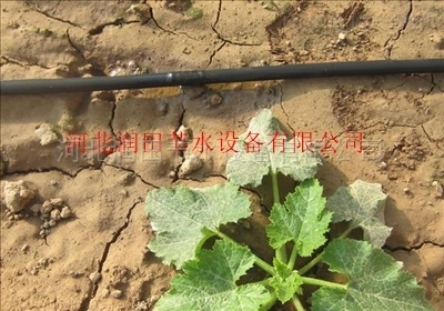 四川项目滴灌管优质灌溉硬管