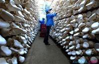 温室大棚蘑菇房温控》器配电箱 自动化控�制