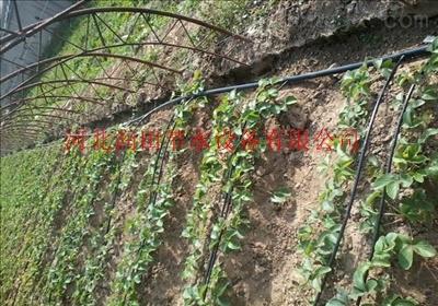 四川滴灌带厂家优质价格