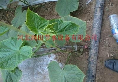 四川雅安市宝兴县滴灌带厂家直销价格