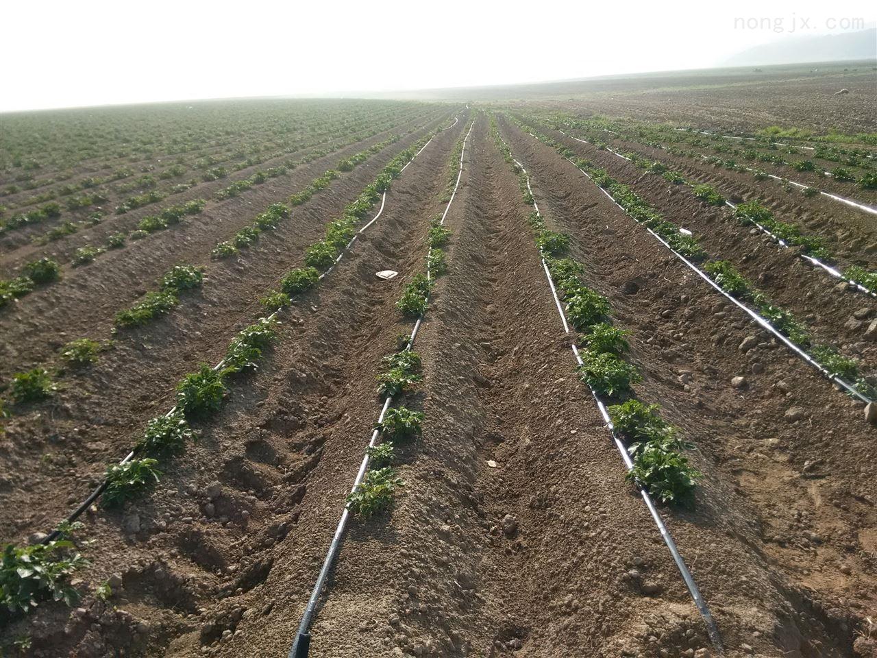 达州市宣汉县滴灌带价格