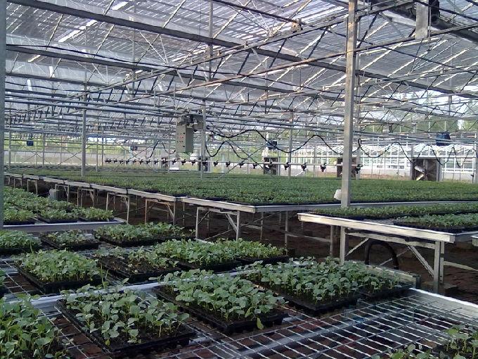 溫室移動噴灌機,安平華耀農業設施有限公司