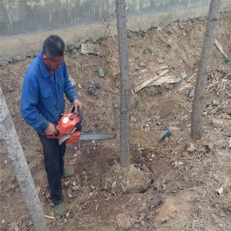 单人操作汽油动力挖树机