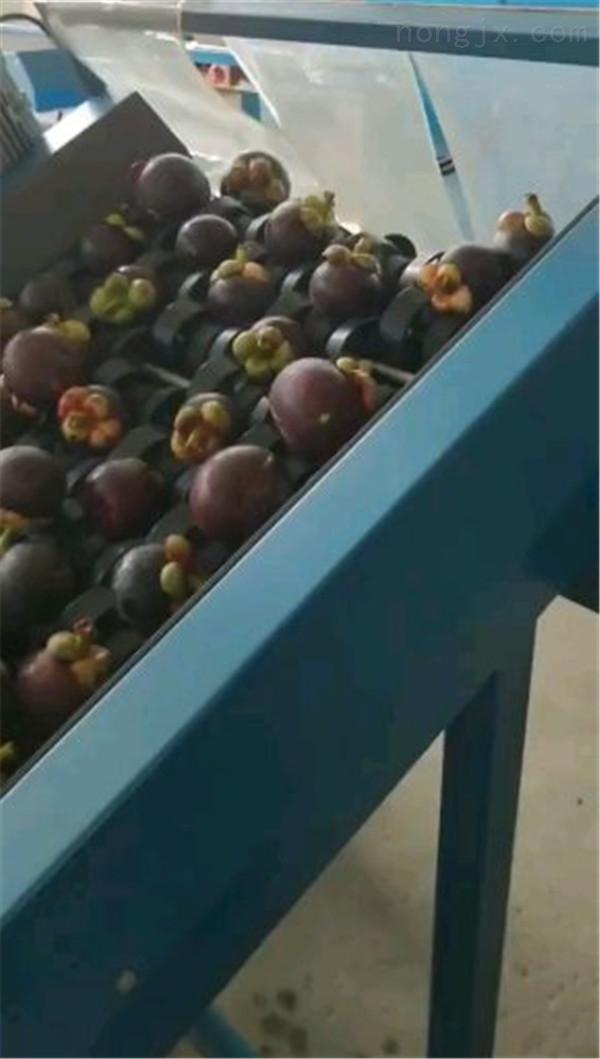 厂家供应专业分选水果的多功能电脑选果机