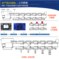 罗非鱼自动分选机_产品分级设备 大航技术