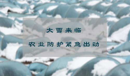 """杭城要来一""""雪""""前耻  观景同时更要做好农业防护"""