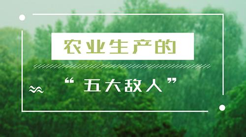 """四川乐山暴雨灾情引关注,细数农业生产的""""五大敌"""""""