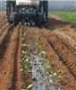玉米移栽机棉花栽植机